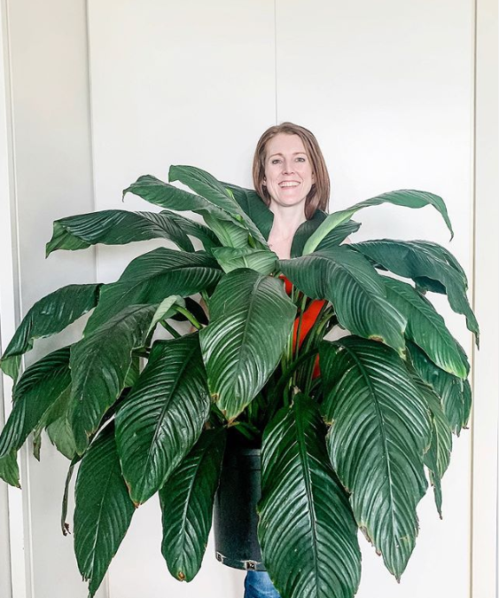 Why size can matter when you're buying plants