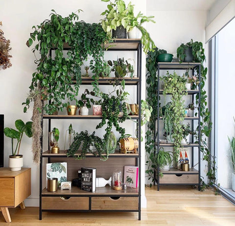 Photo of double shelves filled with plants