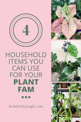 4 household items you can use for your plant fam