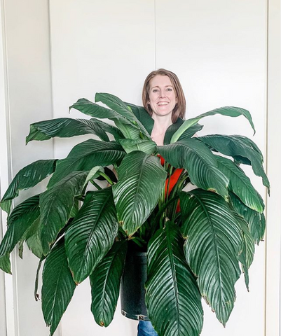 Image of me holding a giant Peace Lily which is so big it almost covers me
