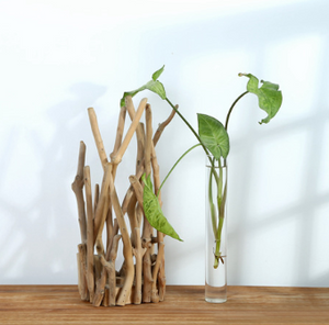 Single Vase in Wooden Branch Stand