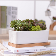White Rectangle Planter on Bamboo Base