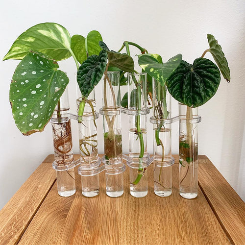 Chemistry Propagation Station - 6 Tube Set