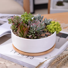 White Round Planter on Bamboo Base