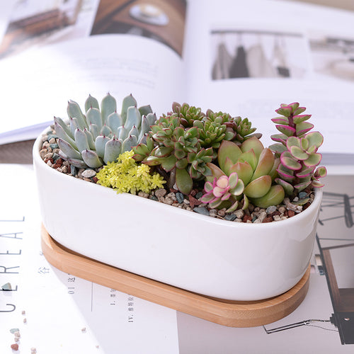 White Oval Planter on Bamboo Base