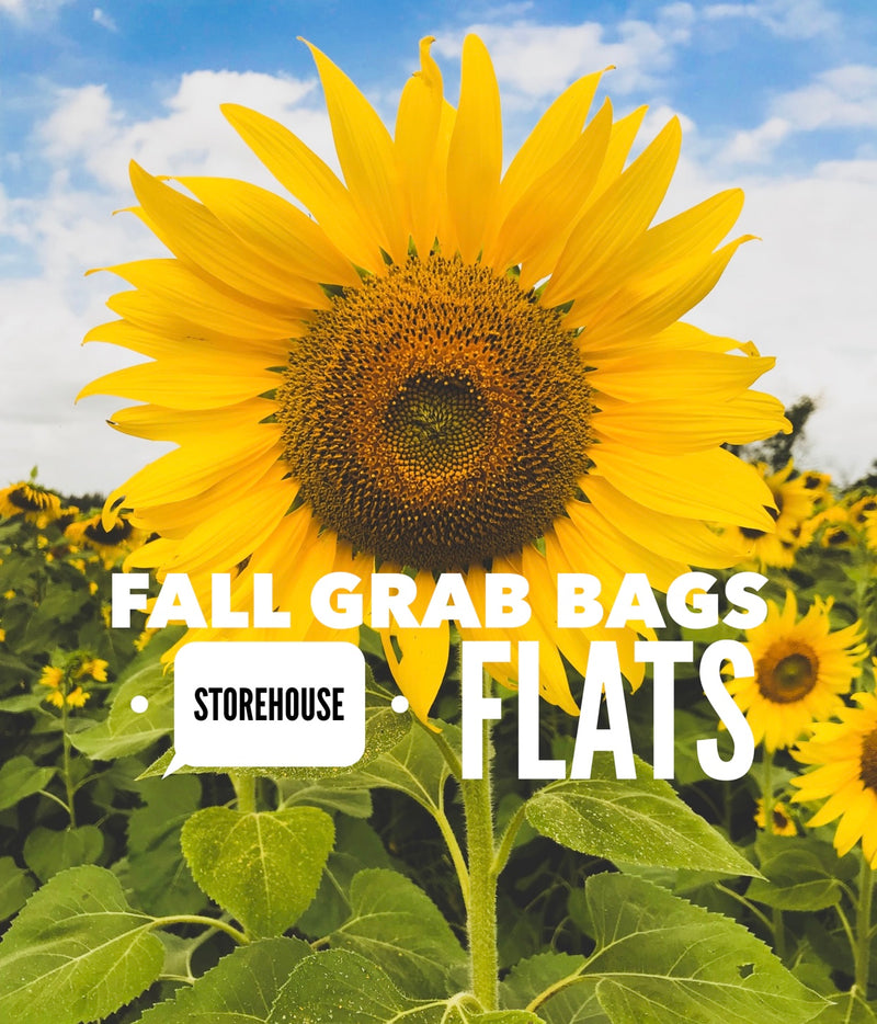 Fall Fun Mystery Grab Bag- Storehouse Flats Edition