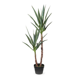 Yucca Plant - 112cm-Decor Items-Floral Interiors-The Bay Room