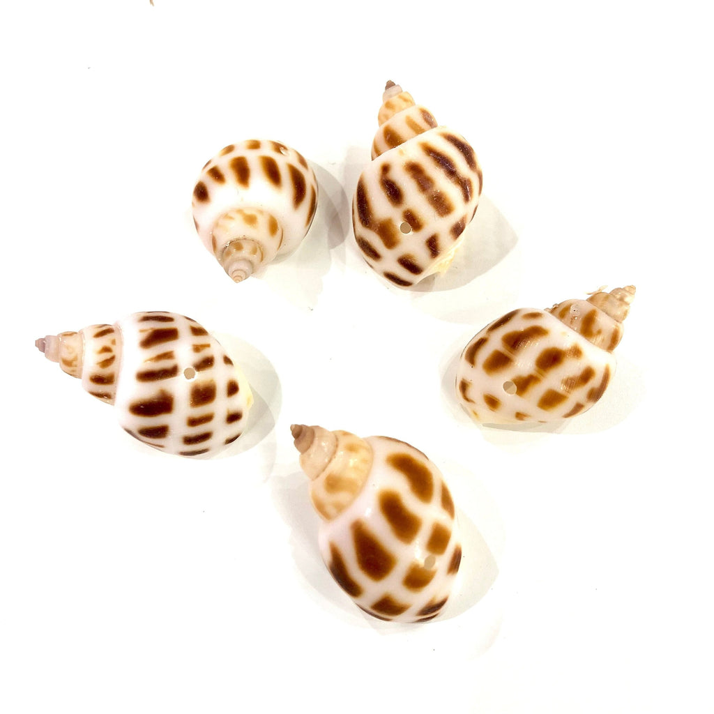 Natural Sea Shell Charms With Drilled Hole, Natural Sea Shell Pendants With Drilled Hole