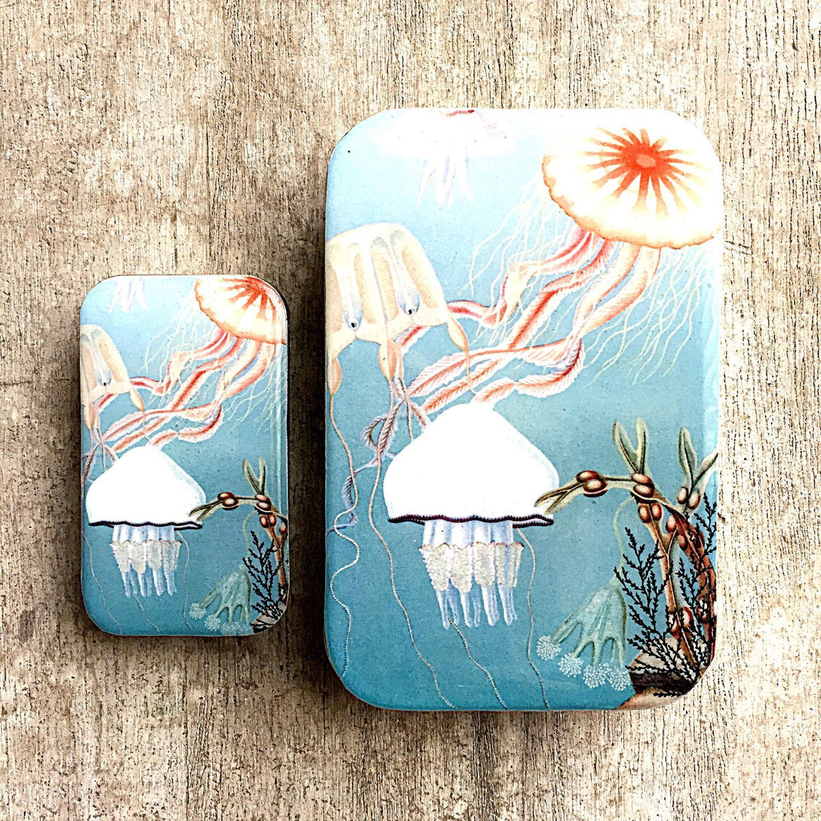 Jelly fish storage tin