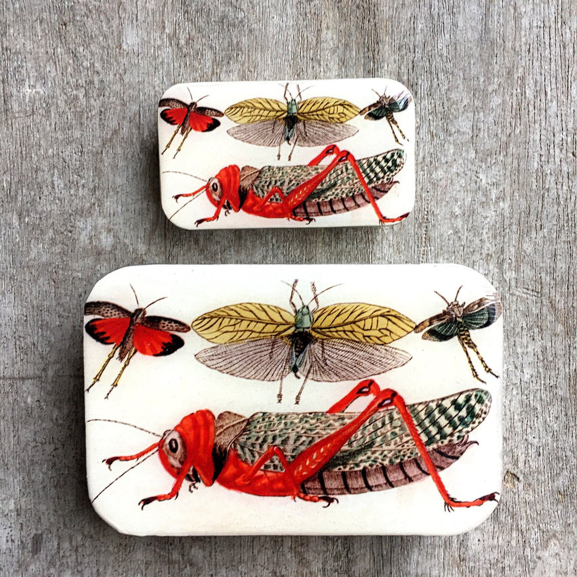 Cricket storage tin