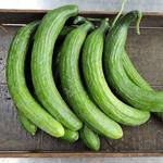 Spray-Free English Cucumber
