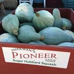 Winter Squash, Mother Hubbard