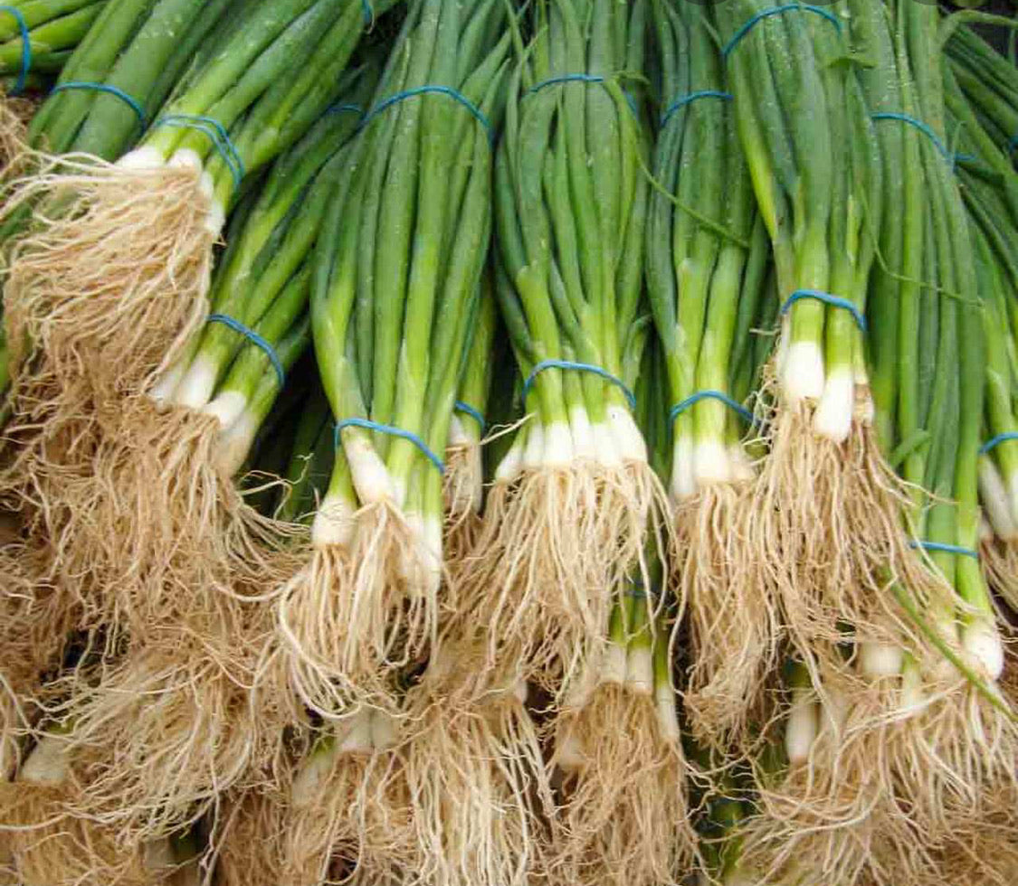 Organic White Bunching Onions