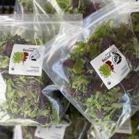 Organic Gourmet Salad Mix