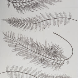 Fern in Charcoal | The Kew Fabric Collection | Lorfords