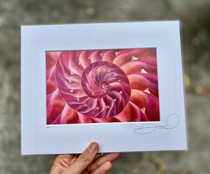 Open image in slideshow, Nautilus Shell Print - Pink Hue