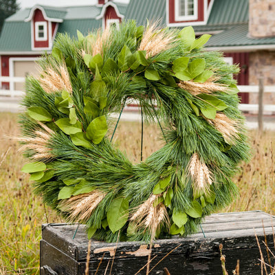 Autumn evergreen wreath made with pine, salal leaves and bearded wheat clusters closeup