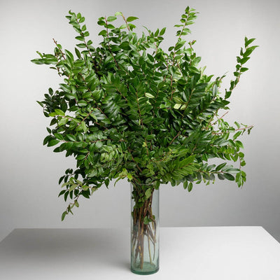 Case of Northwest Green Huckleberry Bouquets