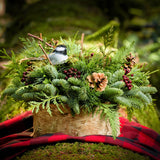 Fresh centerpiece in birch wrapped tin with pine cones, berries and chickadee and birds nest on a red plaid blanket in woods