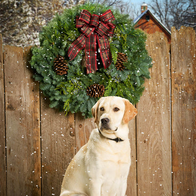 Christmas wreath of noble, cedar, juniper, pine cones and a red plaid bow on a wooden fence near Labrador retriever