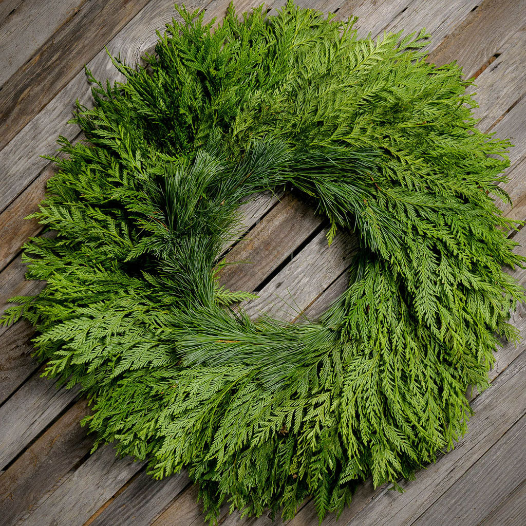 Fresh Evergreen Christmas wreath with cedar and pine and no bow