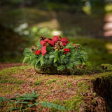 Holiday centerpiece in a bark log with pine cones, red berries and a red burlap bow on a mossy stump in the woods