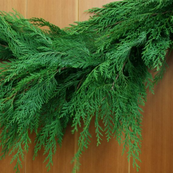 Fresh Port Orford Cedar Garland, deep green, lacy and delicate appearance