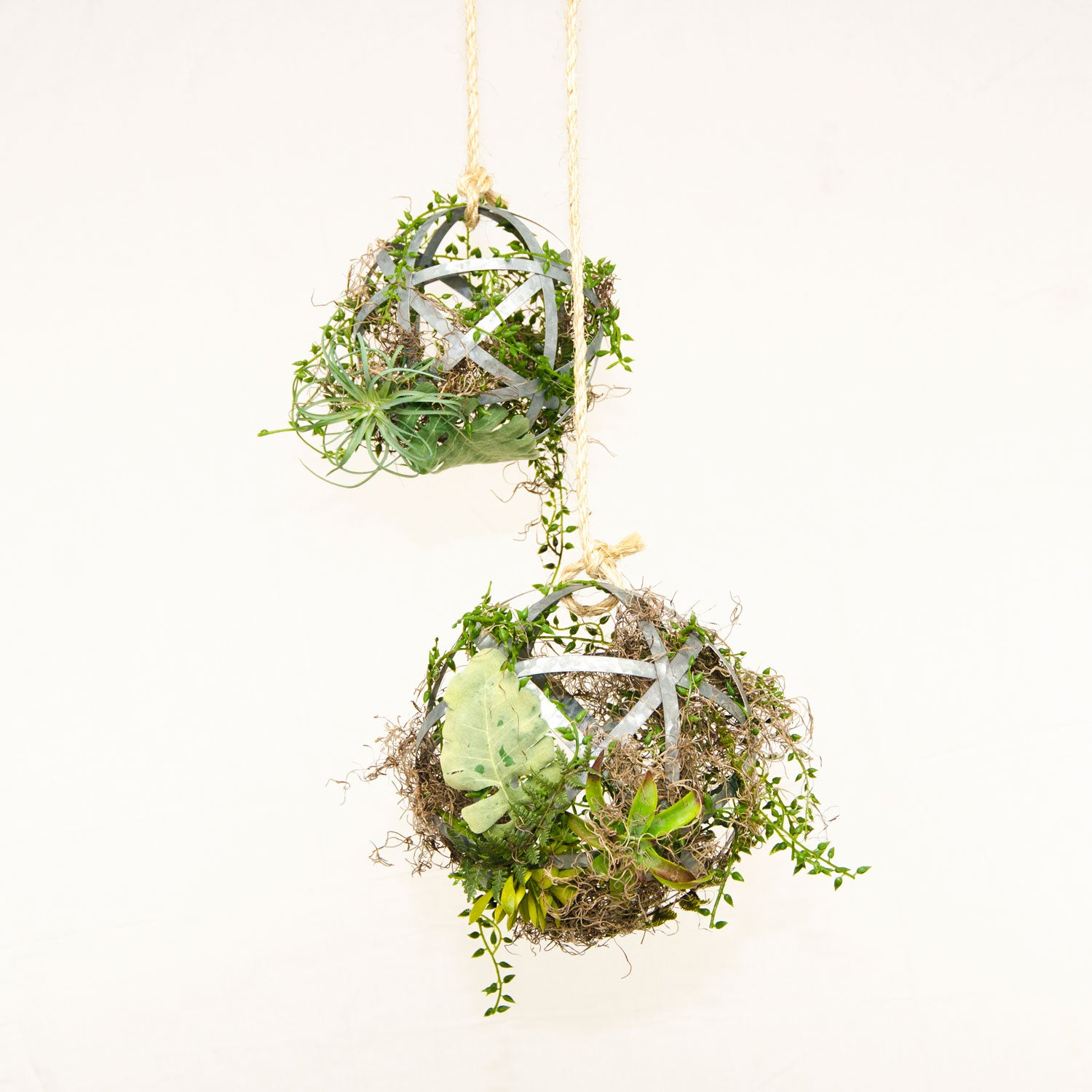 Succulent Sphere Duo - Small and Medium