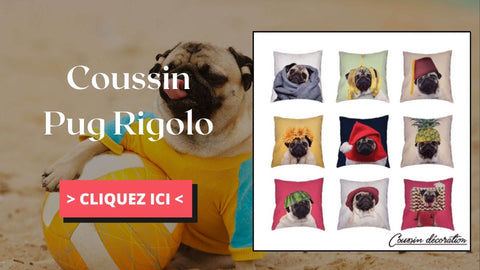 Coussin pug