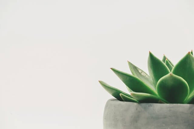 The Fitness Trends That You Don't Want to Miss in 2020 - Green Plant in a White Background - Minimalism | Hummingbird
