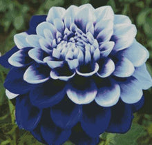 Blue Dahlia DIY 5D Diamond Painting Cross Stitch