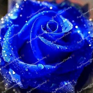 Dew on a Blue Rose DIY 5D Diamond Painting Cross Stitch