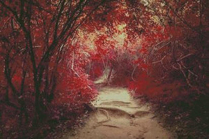 Autumn Path DIY 5D Diamond Painting Cross Stitch
