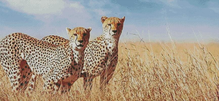 Cheetahs DIY 5D Diamond Painting Cross Stitch