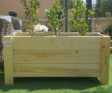 Planter Box Sunflower