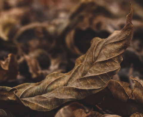Plants have veins, and you don't want to see too many of them in your cigar.