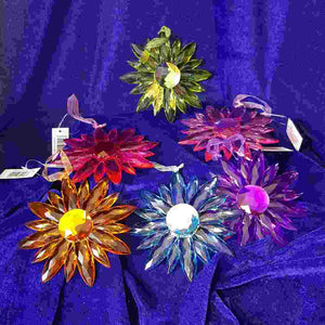 Hanging Daisy (assorted colours approx. 12cm diameter)