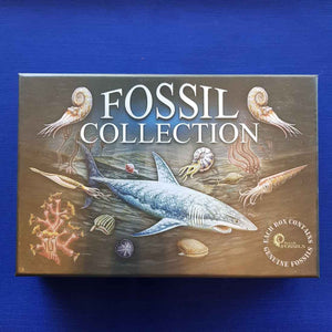 Fossil Collection Kit (15 small fossills & magnifier)