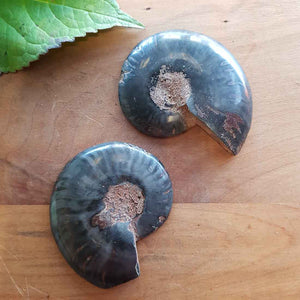 Ammonite Pair. (damaged tip approx. 6x5cm each)