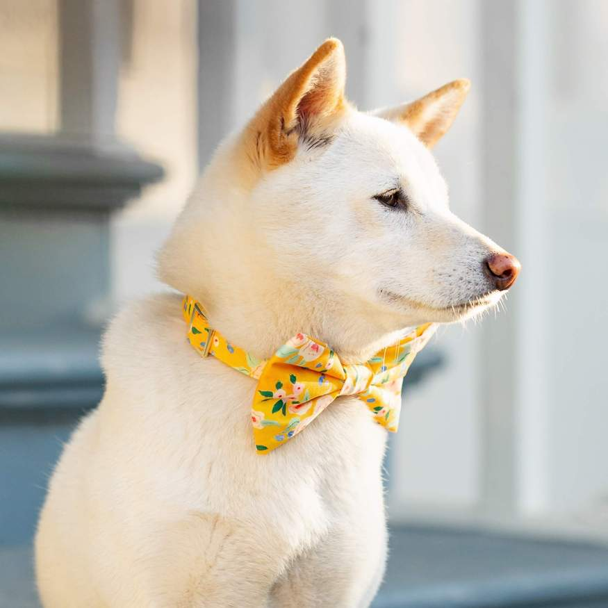 sunshine collar