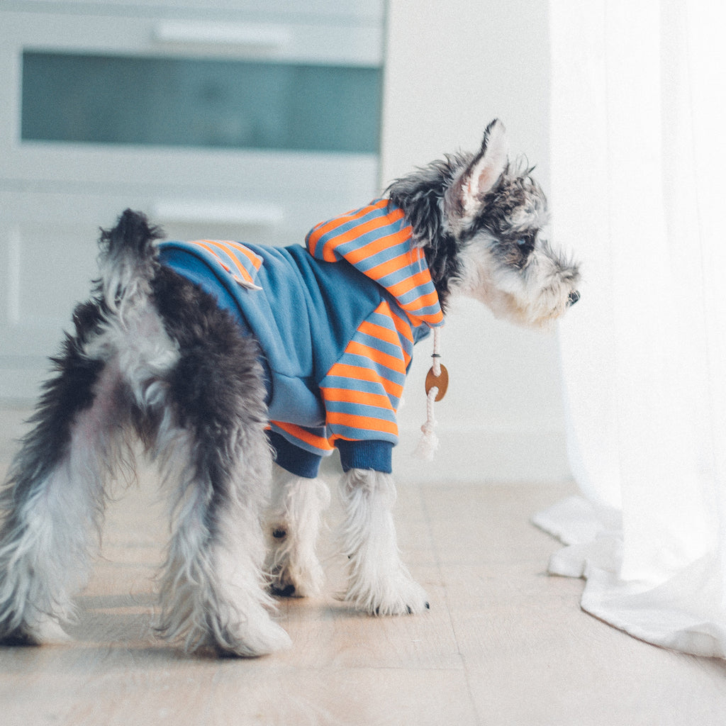 striped hoodie- navy - available in frenchie size!