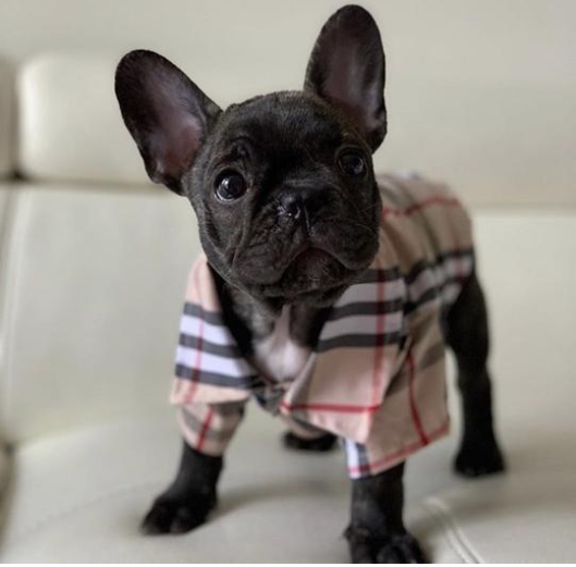 barkberry beige plaid shirt