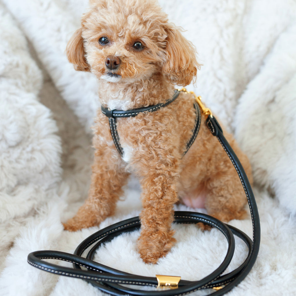 tubular calfskin leash - black