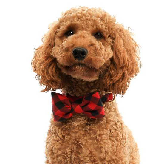 buffalo plaid bow tie with collar
