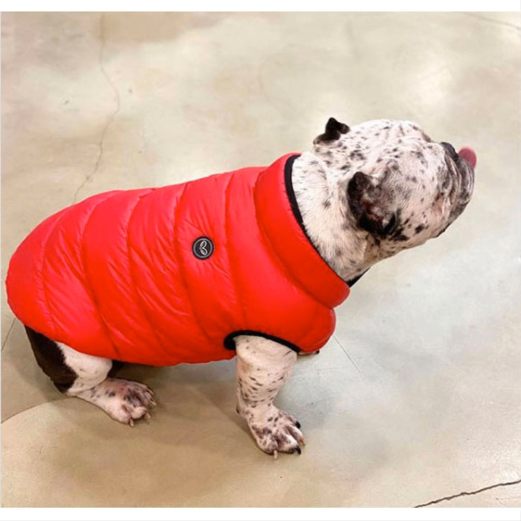 lightweight padding vest for bulldogs - red
