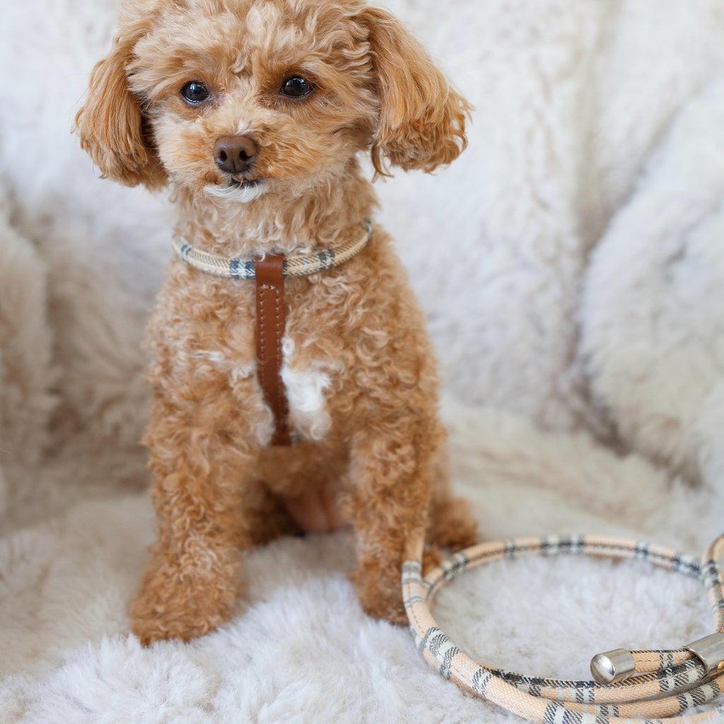 cheri tartan leash - brown