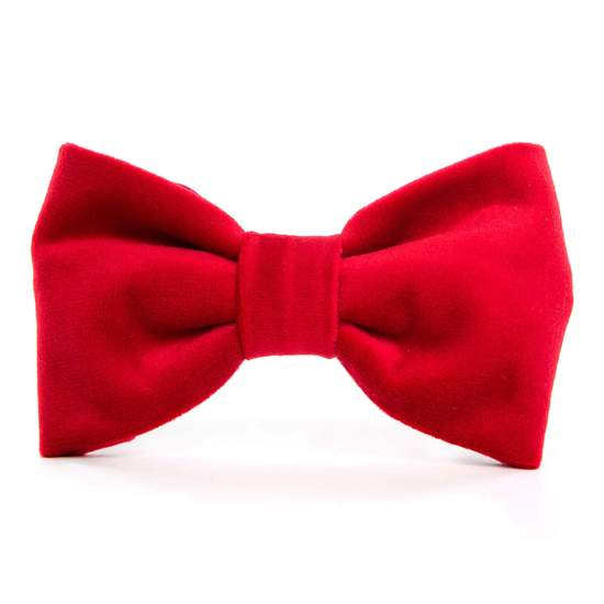 cranberry velvet collar with bow tie