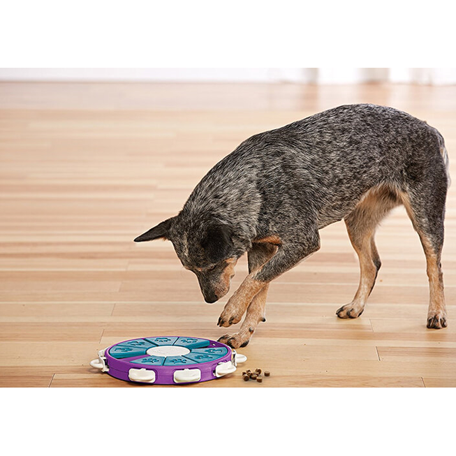 dog twister puzzle toy