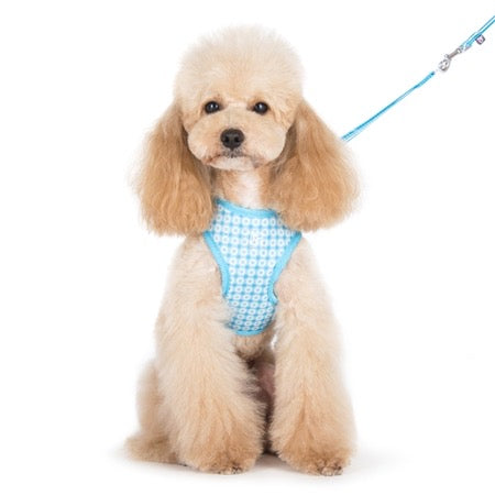 easy go harness and leash set - blue dots