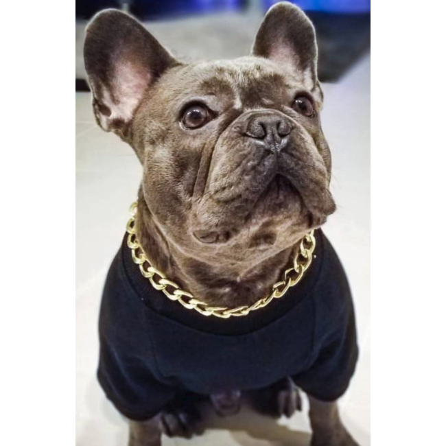 gold dog chain necklace